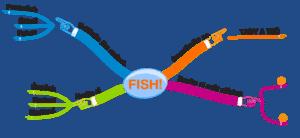 myšlenková mapa film FISH