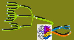 podnikatelsky-mozek